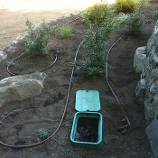 saltspring_drip_irrigation_RHo_1